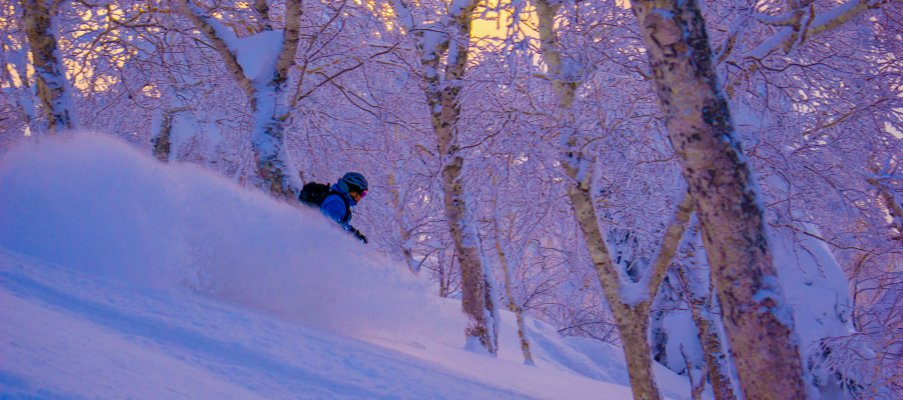 Perfect tree skiing in Japan